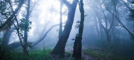 Mystic primeval forest in blue misty, soft sunbeam shines through branches of wild trees onto epiphytes growing on the trunk of tropical trees.
