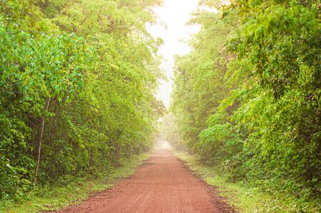 A long straight dirt road leading towards a tropical forest in early morning. Pang Sida National Park, Thailand. Focus on foreground. Stock Photo