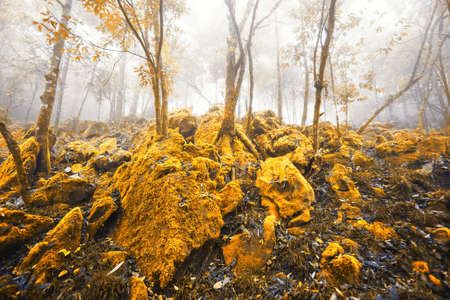 Magical yellow forest in autumn, fantastic yellow moss and lichen growing in the rock and tree trunk in the mist. Soft focus.