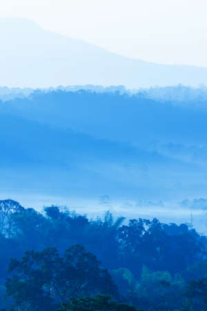 A tranquil landscape of blue mountain in the morning mist, soft sunrise shines on a pine forest in the blue fog.