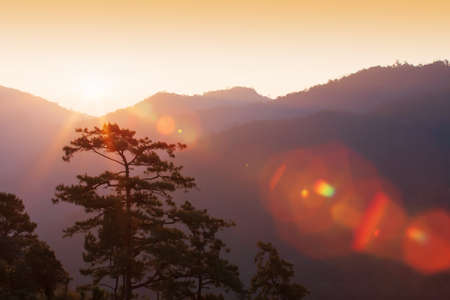 Glowing sunrise shines over mountains and pine forest, bright lens flare ray from the sun. Фото со стока