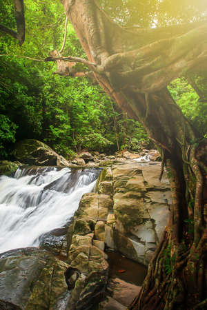 Pure waterfall in a tropical rainforest, sunrise shines through branches of a large banyan tree onto waterfall. Pala-U Waterfall, Thailand. Long exposure. Focus on waterfall.