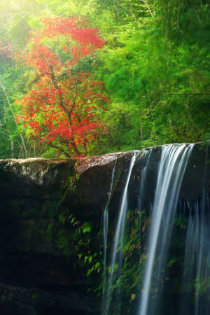 Autumn waterfall and red maple tree blurred in the background. Long exposure. Soft focus on waterfall.