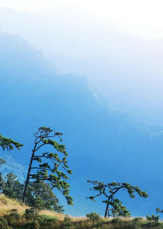 Scenery of blue mountains and pine forest in winter, soft sunrise shines on layers of mountains in the background. Focus on pine forest.
