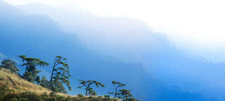 Panoramic scenery of blue mountains and pine forest in winter, soft sunrise shines on layers of mountains in the background. Focus on pine forest.