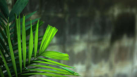 Decorative green palm leaves in a tropical courtyard, concrete masonry unit blurred in the background. Фото со стока