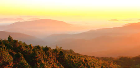 Scenery mountain range at sunrise, warm early light shines on gentle mist covers mountains and pine forest. Focus on pine forest in the mist.