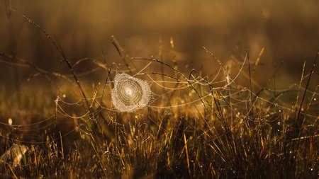 Glowing spider web or cobweb with dew hanging on the grass in the morning, sunrise shines on spider web and grassland in the background. Selective focus. Imagens