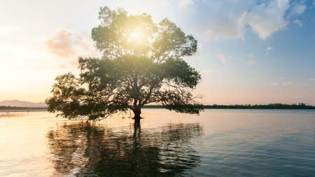 A big mangrove tree growing in a sea. The sun rising over an island in the background. Environment concept. Soft focus on a tree. Imagens