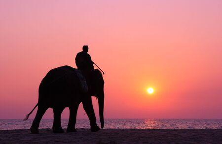 Elephant mate