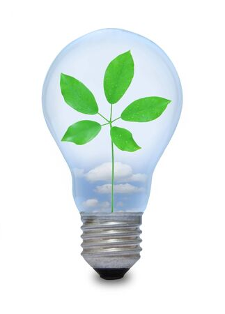 A light bulb with leave inside Stock Photo - 15962112