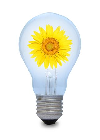 A light bulb with sunflower inside Stock Photo - 15962113