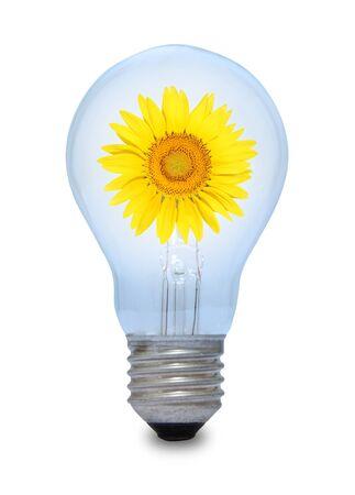 A light bulb with sunflower inside Stock Photo - 15962113