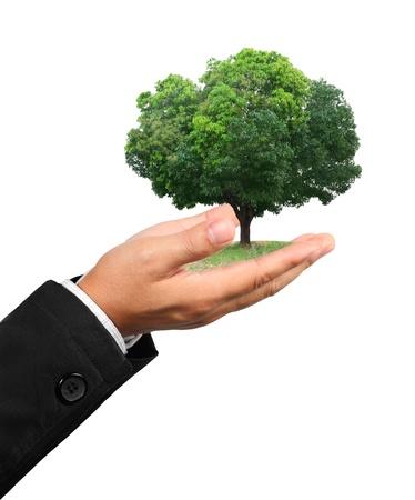 medio ambiente: mano de hombre de negocios que sostiene un �rbol aislado sobre fondo blanco Foto de archivo