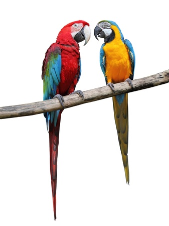 Colorful parrots saying isolated on white background Stock Photo