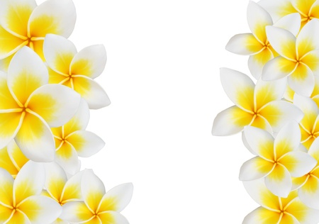 frangipani: Frangipani design collage isolate on white Stock Photo