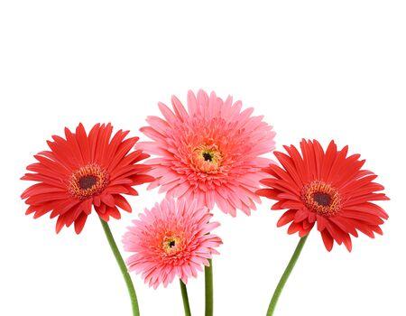 botan: Gerbera flower collage isolated on white Stock Photo