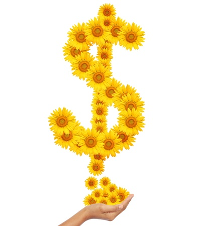 Hand idea with sunflowers money sign image isolate on white photo