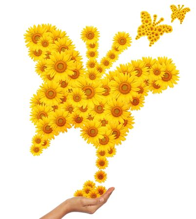 create idea: Hand idea with sunflower butterfly image isolate on white Stock Photo