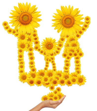 hand idea with sunflower family image isolate on white  photo