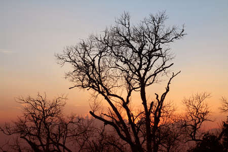 Tree branches silhouette sunset photo