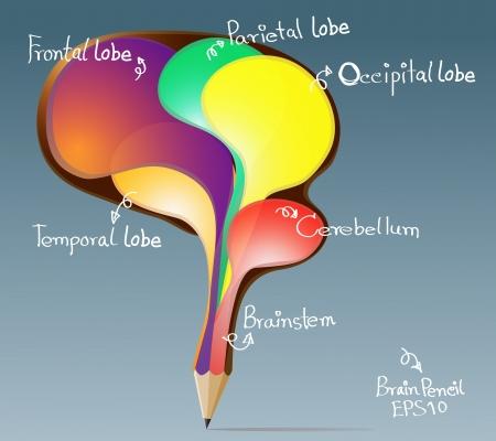 inspiration education: Creative pencil concept of the human bubbles brain illustration Illustration