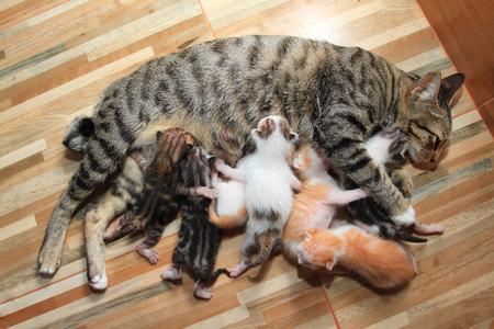 kleine baby kitten borstvoeding moeder kat hout achtergrond.