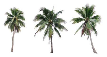 Set of coconut tree isolated on white background Imagens