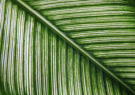 Close up Green detail of leaf texture. Abstract nature beautiful of leaves background.
