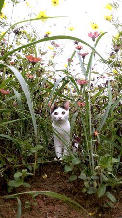 eye: White cute cat is sitting in flower garden  Stock Photo