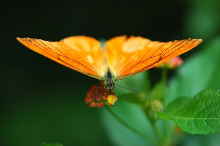 Butterfly Stock Photo - 8296016