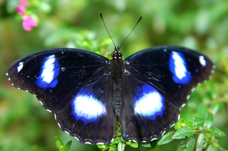 Butterfly Stock Photo - 8296018