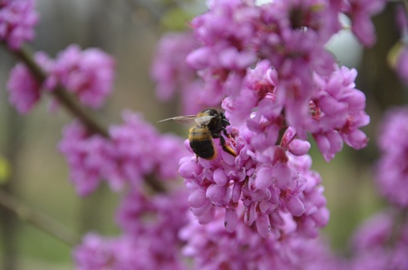 bee on purple flowers photo