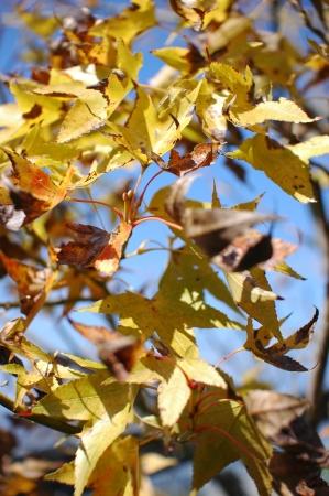 Autumn pattern Stock Photo - 14631156