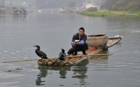 Cormorant Bird catch fish at Yulong River
