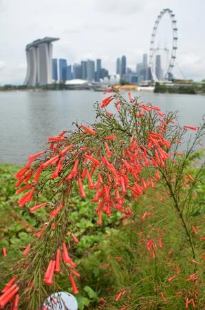 garden city: Jard�n de la ciudad de Singapur Foto de archivo