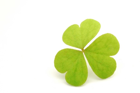 Green clover leaf on white photo