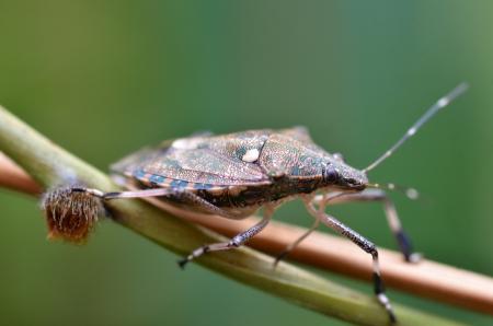 burying: Burying beetle