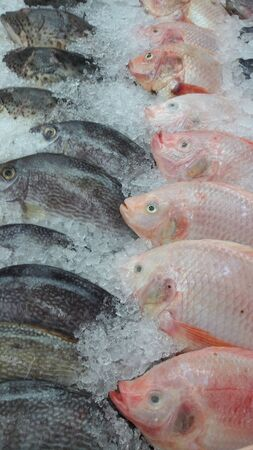 Fresh fish in the market Stock Photo - 17894807