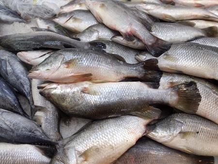 Fresh fish in the market Stock Photo - 18084168