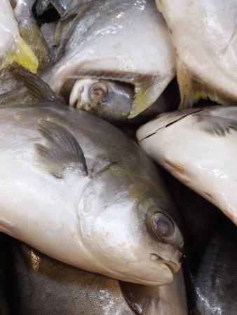 Fresh fish in the market Stock Photo - 18084146