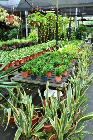 plant nursery: Garden shop