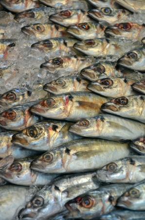 Fish on market photo