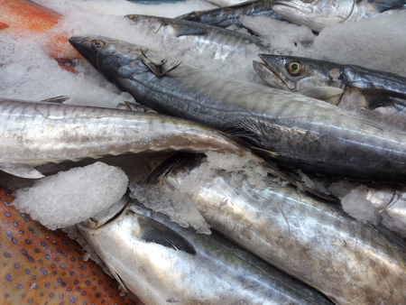 snakehead: Snakehead fish in market with ice, ready for sell