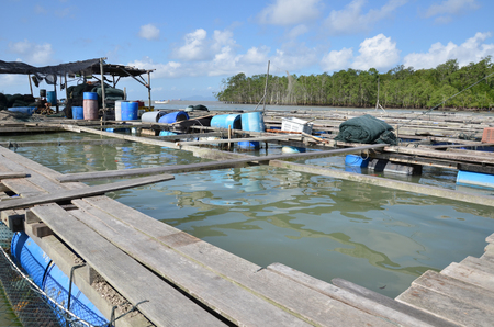 predominantly: Kelong, offshore platform, built predominantly with woodby fishermen for fishing purposes