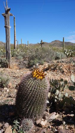sonora: The Arizona-Sonora Desert Museum