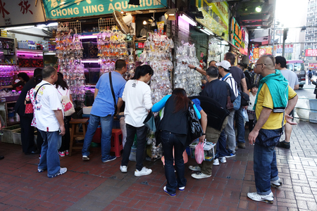 HONG KONG-NOVEMBER 21 : Customers visit fish shop on 21 Novemer 2014 in Hong Kong, China. Hong Kong Gold fish market in Tung Choi street is famous for tourists.