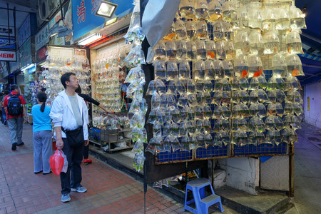 fish shop: HONG KONG-NOVEMBER 21 : Customers visit fish shop on 21 Novemer 2014 in Hong Kong, China. Hong Kong Gold fish market in Tung Choi street is famous for tourists.