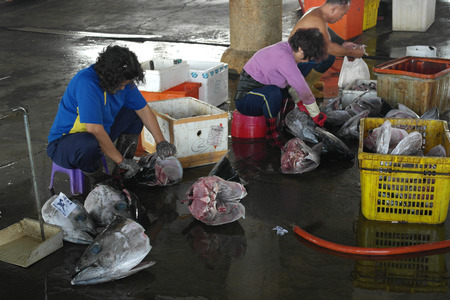 occupying: DONGGANG, TAIWAN-NOV 25: Fishermen slaughter the tuna fish on November 25, 2014 in Donggang, Taiwan. Japan was the biggest importing country of Donggang tuna, occupying 80% of its market.