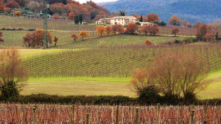 wineyard: Wineyard located in Montalcino, Italy in the winter Stock Photo